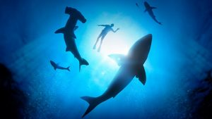 join us for the incredible planet shark exhibit on a free family day for childrens week at the wa maritime museum